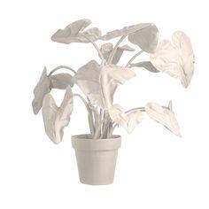felt plants, Jan Willem de laive