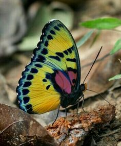 What a beautiful butterfly!  (: