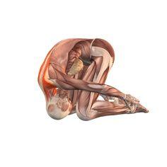 Hare pose, thighs forward, arms alongside legs - Shashankasana advanced - Yoga Poses | YOGA.com