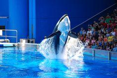 @SeaWorld's signature Shamu show, One Ocean