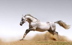 Horse Wallpaper Desktop #BdF