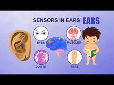 Ears - human body parts - pre school - animated videos for kids The Human Body, Human Body Unit, Human Body Parts, Science Videos, Science Lessons, Life Science, Science Experiments, Human Body Activities, Health Activities