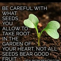 Heart Seeds