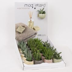 Cute Christmas Succulents Gift Set - Magnetic planters - Ideal Stocking Filler Present - Delivery in First Week of December or Before - Perfect for use on fridges, whiteboards and other magnetic surfaces - Instant colour splash in a modern style - Gift wrap can be added for extra special touch - Love heart planters, Black and White Planters and Modern colours available. (1, Multi)
