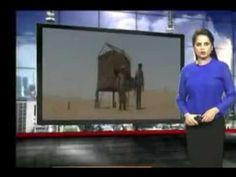 Indian Media Crying & Blaming Pakistan Army; Indians Propaganda Against ...