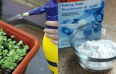 Gardening tips with baking soda - Garden Gardening Zones, Gardening Tips, Gardening Vegetables, Garden Online, Garden Trellis, Permaculture, Organic Gardening, Baking Soda, Guide