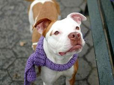 SAFE - URGENT - Manhattan Center    MICHELLE - A0984267   Main thread: https://www.facebook.com/photo.php?fbid=727859143893634&set=a.617938651552351.1073741868.152876678058553&type=3&permPage=1