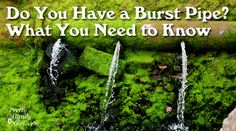 Today's regularly scheduled post has been interrupted by a leak in our laundry room. I hope my misfortune is your gain. These are the things I've learned about burst pipes, polybutylene pipes and mold. If you are a homeowner, soon-to-be a homeowner or even if you rent, this post …