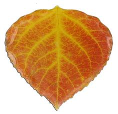Aspen leaf inspiration for aspen tree ornaments.