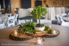 Bonsai tree centerpieces. Jennette's Pier Wedding / Outer Banks Wedding / Photo by Genevieve Stewart Photography #jennettespierwedding #outerbankswedding #jennettespier #obx #nagsheadwedding