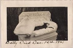Dog-Post-Mortem-Boston-Terrier-Betty-in-Fancy-Coffin-Vintage-1941-Photograph