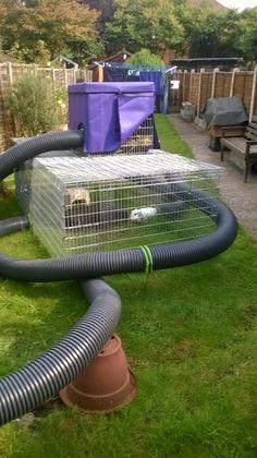 Rabbit hutch, rabbit run tube play habitat for rabbits