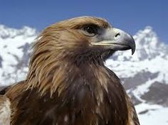 How do eagles hunt? Why are they called great or expert hunters? What animals do they prey on? Learn fascinating and amazing Eagle Facts for Kids here while having fun! http://www.easyscienceforkids.com/all-about-eagles.html