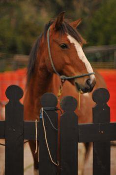 Caballos del a Granja del Tío Mario Mario, Horses, Animals, Country Life, Photos, Animales, Animaux, Horse, Animal Memes