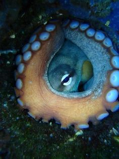 Octopus. Such a cool photo.