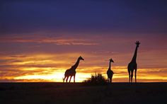 Best Life-Changing Trips: safari in Tanzania and Kenya