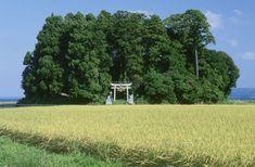 鎮守の森[26106000137]の写真素材・ストックフォト。アマナイメージズでは2500万点以上の高品質な写真素材を販売。オリジナルロイヤリティフリー素材も充実。 Landscape Photography Tips, Amazing Photography, Watercolor Night Sky, Japanese Shrine, Torii Gate, Aesthetic Japan, Japanese Landscape, Japanese Streets, World View