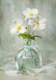 White anemones - sometimes called windflowers because they dance on the wind