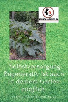 Reben Creating a basis for sustainable gardening: The soil is . Capital Of Rome, Nutrient Cycle, Automatic Irrigation System, Water In The Morning, Garden Leave, Water Waste, Weather Change, Different Plants, Garden Soil