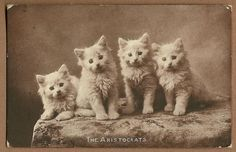 Cats in Art, Illustration, Photography, Decorative Arts, Textiles, Needlework and Design: Vintage Sepia Photo Postcard of Four Kittens - The Aristocrats