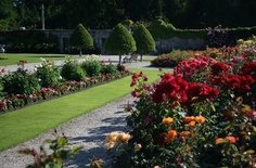 The roses in Powerscourt Gardens, Ireland. There are hundreds of roses to enjoy at Powerscourt during the summer months. www.powerscourt.ie