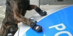 Was soll das denn?: Hamburgs Polizeihunde tragen bald Schuhe ...