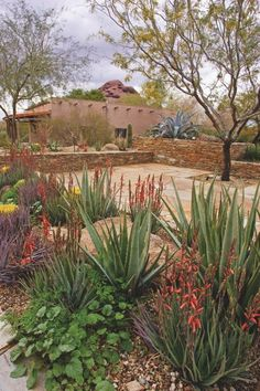 Beyond Xeriscaping: How to Create a Low-Water Landscape Design for Your Yard Xeriscape with lots of color, perfect low water plants for hot weather Low Water Landscaping, Succulent Landscaping, Landscaping Images, Landscaping Plants, Front Yard Landscaping, Modern Landscaping, Landscaping Software, Dollhouse Landscaping, High Desert Landscaping