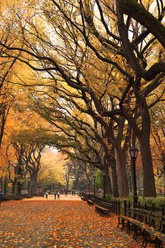 'Autumn Stroll', United States, New York, New York City, Central Park, Mall Area | Flickr - Photo Sharing!