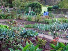 agriculture-jardins familiaux et pollution
