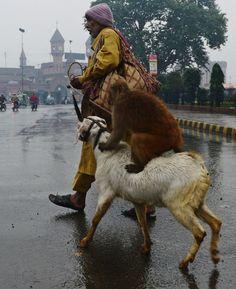 Fotos de animales: los bichinos de la semana