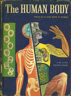 Found this vintage anatomy book in Memphis and LOVE IT - a great source of inspiration for color schemes in my work