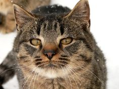 Barn Cat ll by Christine Stanton