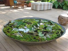 Water garden planter: I did this with a 2 foot wide galvanized tub.     I got a similar idea from Margaret Roach's website  www.awaytogarden.com .