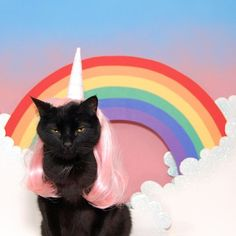 Black cat featured in cat calendar and he's in costumes. Animals And Pets, Funny Animals, Cute Animals, Crazy Cat Lady, Crazy Cats, Basement Cat, Cat Calendar, Unicorn Cat, Rainbow Unicorn