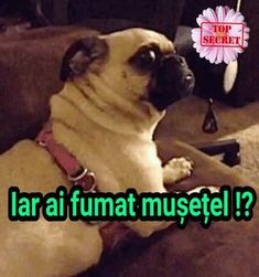 The perfect Pug Shocked Surprised Animated GIF for your conversation. Discover and Share the best GIFs on Tenor. Funny Dogs, Funny Animals, What Gif, Pug Gifs, Old Pug, The Perfect Dog, I Dare You, James Brown, Thug Life