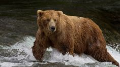 brown-bear-hibernation.jpg (JPEG-Grafik, 942×530 Pixel)