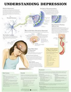 The neuroscience of depression For help in Denver, please visit clinicalcounselingandarttherapy.com . #neuroscience #psychology