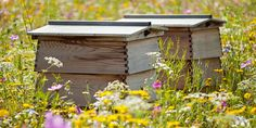 Beekeeping is a wonderfully rewarding and relaxing pastime - gain an insight into one of nature's most fascinating creatures (not to mention delicious honey).