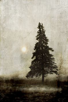 winter light... by Jamie Heiden. Not a painted tree, but a photograph, re-worked.