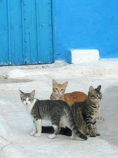 Cats in Rabat, Kasbah, Morocco.