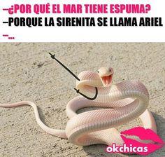 Que mal chiste 😂😒 Funny Spanish Memes, Spanish Humor, Funny Animal Memes, Funny Jokes, Images Minecraft, Best Memes Ever, Pinterest Memes, New Memes, Really Funny