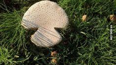 A mushroom shaped like a mushroom.