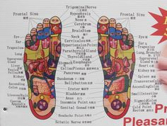 Organ foot diagram schematic wiring diagram joannamagrath reflexology hand foot reflexology rh pinterest com liver diagram organ diagram on model ccuart Image collections