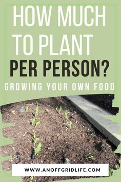 How Much To Plant Per Person: Growing Your Own Food An Off Grid Life Learn how much to plant per person when growing your own food to feed your family. Off Grid, Types Of Vegetables, Growing Vegetables, Veggies, Gardening For Beginners, Gardening Tips, Flower Gardening, Succession Planting, Planting Potatoes