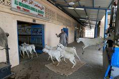 Abu Dhabi abattoirs ready for Eid rush