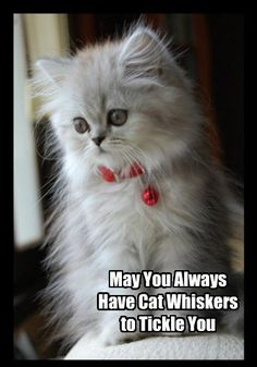 Cute Kittens Gif Funny between Cute Cats And Dogs Try Not To Laugh. Cute Cats Dogs Wallpaper behind Cute Kittens For Sale London Uk, Cute Furry Animals List Cute Kittens, Kittens And Puppies, Kittens Meowing, Ragdoll Kittens, Tabby Cats, Bengal Cats, Animals And Pets, Baby Animals, Funny Animals