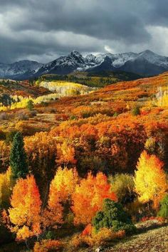 Autumn in Montana.♥ Montana is such a beautiful state. Belle Image Nature, Beautiful World, Beautiful Places, Simply Beautiful, Beautiful Pictures, Big Sky Country, Pikes Peak, All Nature, Fall Pictures