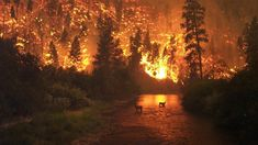 456201-forest-fire-pixabay.jpg (640×360)