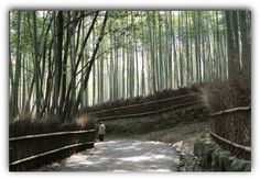 Learn how to realize nothingness in meditation. When the mind has nothing to cling on to, it falls back into nothingness. It becomes intoxicated by its own relinquishment. From a live satsang. Yoga Meditation, Kyoto, Bamboo, Country Roads, Japan, Stock Photos, Plants, Pictures, Photography