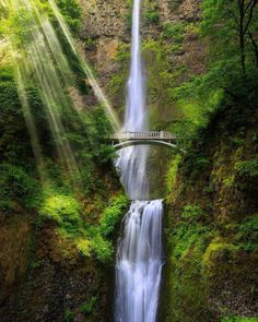 """mthrworld: """" Multnomah Falls, Oregon by: @ilhan1077 Visit us at www.mthrworld.com and get our new shirts now for only 19,99€ #multnomahfalls #waterfalls #hiking #falls #naturelovers #naturegram #outdoor #nature_seekers #nature #travel #wanderlust..."""